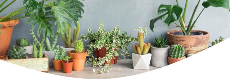 kamerplanten assortiment