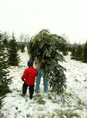 soorten kerstbomen