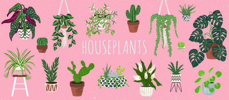 Illustratie kamerplanten