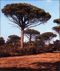 bos van Parasoldennen