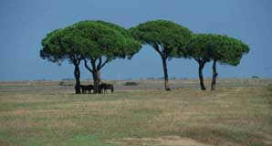 parasoldennen in de Toscane