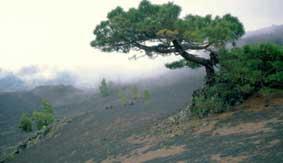 oude parasolden op La Palma