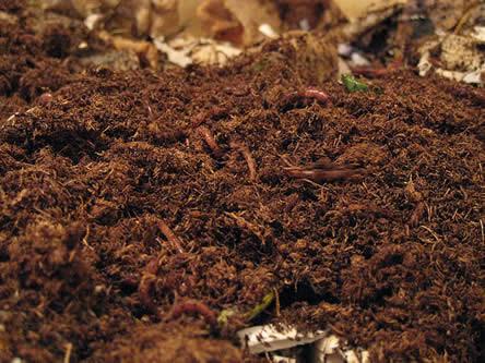 leven in de bodem - verbeteren bodemstructuur