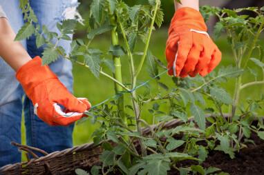 Tips bij het ondersteunen van tuinplanten