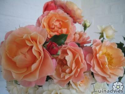 rozen als snijbloemen in een vaas