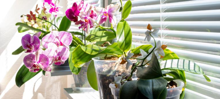 Verzameling orchideeën