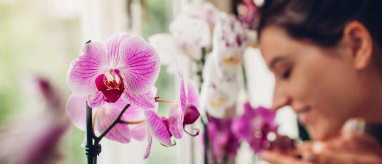 Liefde voor orchideeën