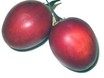 boomtomaat of tamarillo van de familie van de tomaat maar met weinig andere gelijkenissen