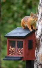 eekhoorns voederen - zoogdieren in de tuin