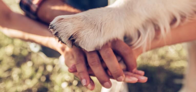 World Animal Day - 4 oktober