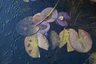 Bevrozen wateroppervlak