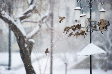 Een druk bezochte voederplaats in de winter.