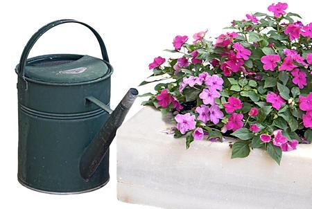 water geven met de gieter aan uw bloemen
