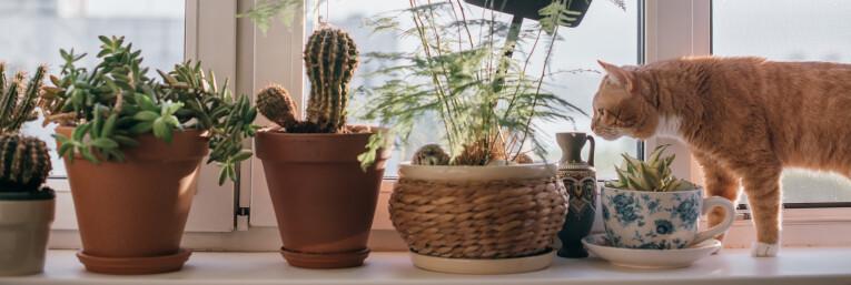 Huisdieren en kamerplanten