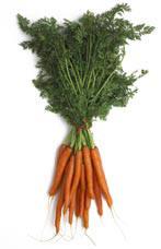 Busselwortelen zijn de vroegste wortelen van het seizoen.