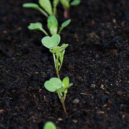 compost houdt de planten gezond