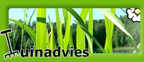 Tuinadvies: dé best bekeken tuinsite van België & Nederland