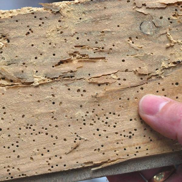Houtwormen bestrijden