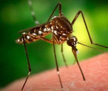 Muggen bestrijden