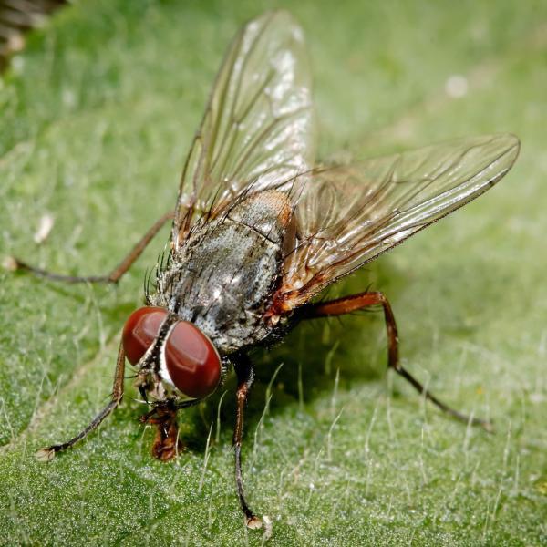 Vliegen bestrijden insecten in en rond de woning for Vliegen in de tuin