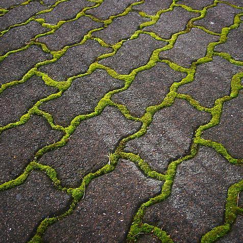 Mos verwijderen terras en oprit