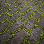 Groene aanslag en mos