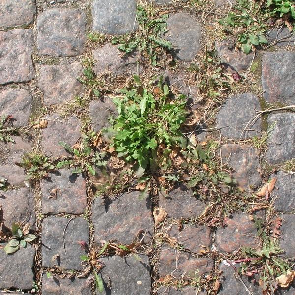Onkruid tussen stenen