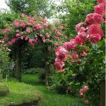 Onkruiden tussen rozen