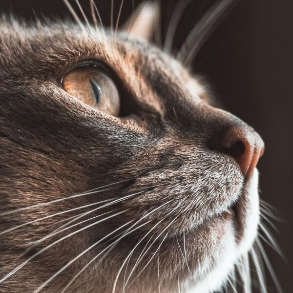 Katten bestrijden