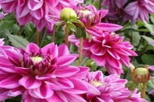 Groot aanbod zomerse bloembollen... nu online te koop!