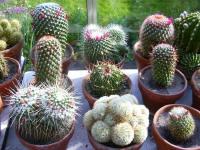 Potgrond Voor Cactussen.Kamerplant Cactus Potgrond