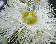 bloem closeup
