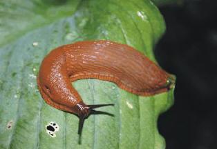 slakken bestrijding
