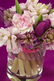 Hyacint snijhyacint