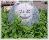 Kattenstront In Tuin : Hoe katten uit de tuin houden liv green