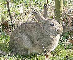 konijnen en hazen weren uit de tuin konijn verjagen