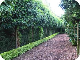Bomen In Tuin : Kleine bomen kiezen en planten in de voortuin stadstuin of andere