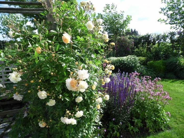 roos klimroos rosa 39 ghislaine de feligonde 39 planten online kopen. Black Bedroom Furniture Sets. Home Design Ideas