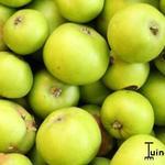 Malus domestica 'Jacques Lebel' - Appel