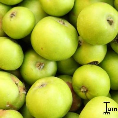 Malus domestica  'Jacques Lebel' - Appel