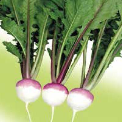 Meiraapje, Tuinraap - Brassica rapa var. majalis 'Ronde witte roodkop'