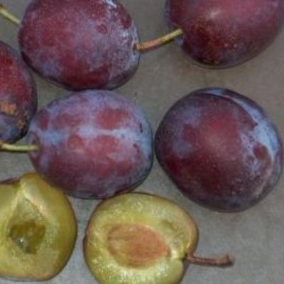 Prunus domestica 'Anna Späth' -