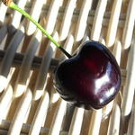 Prunus avium 'Kordia' - Kerselaar, Kersenboom - Prunus avium 'Kordia'