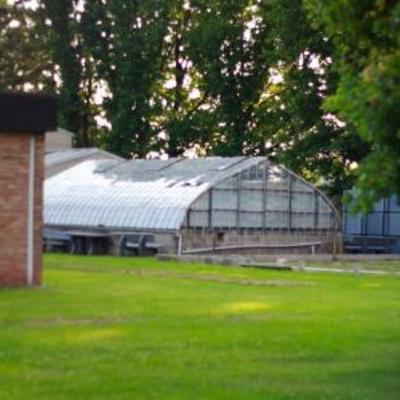 Oude druivenserre opbouwen - glas - mastiek vraag
