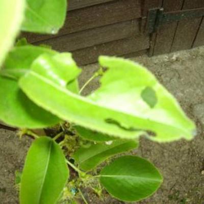 Welke insecten tasten mijn plantje aan en hoe ze bestrijden