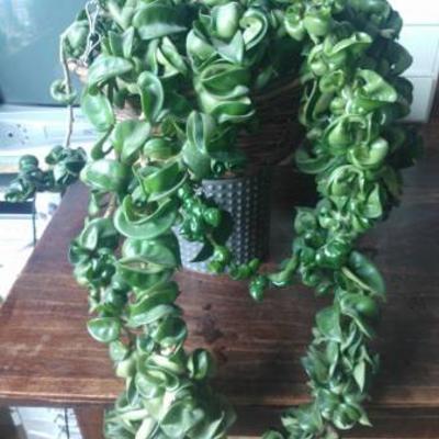 Hangplant schaduw