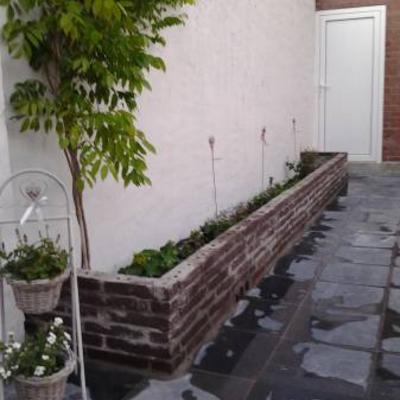 Hippeastrum amaryllis zonder aarde kweken - Muur steen duidelijk ...
