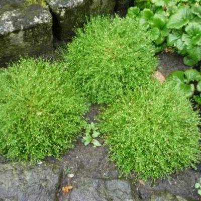 Op zoek naar naam van plant zonder foto