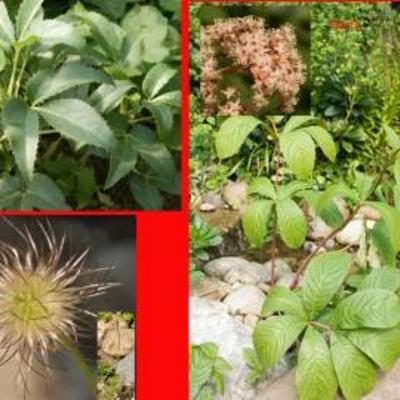 Drie planten
