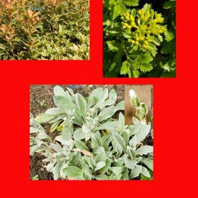 Naam planten gezocht